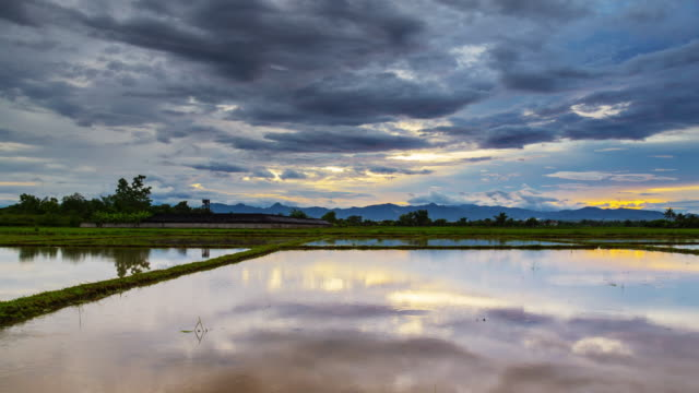 Clouds sunset and water reflection in rice field Day to sunset Time-lapse.