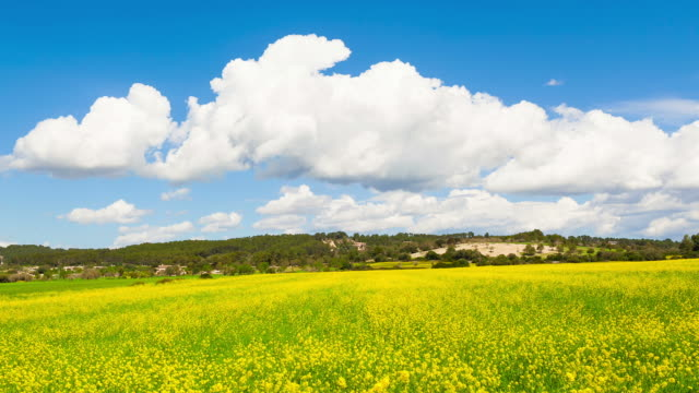 clouds to pass on a rape field - time lapse - crucifers stock videos & royalty-free footage