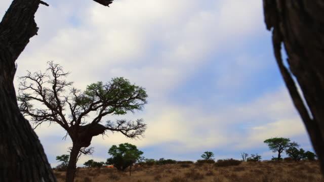 vídeos de stock, filmes e b-roll de clouds travel across a savannah in south africa. - áfrica meridional