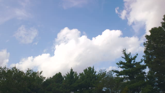 clouds, treetops in park, boston but cba - treetop stock videos & royalty-free footage