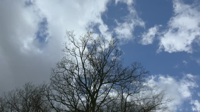 clouds - bare tree stock videos & royalty-free footage