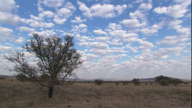 Clouds zoom by over the South African savanna.