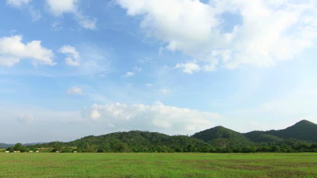 Cloudscape and pasture