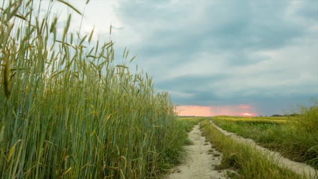 T/L 8K Cloudscape over dirt road among wheat fields