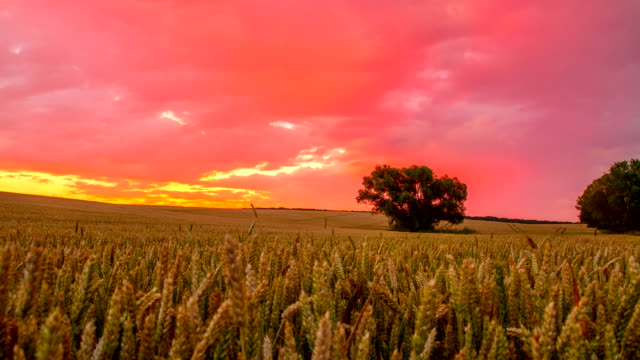 t/l cloudscape over wheat field at sunrise - wheat stock videos & royalty-free footage