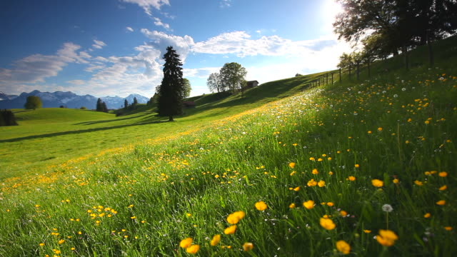 cloudscape with blooming summer meadow in bavaria, germany