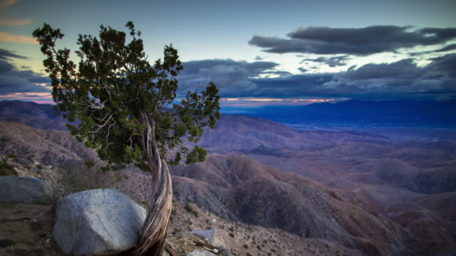 cloudy joshua tree sunset - timelapse - joshua tree national park stock videos & royalty-free footage