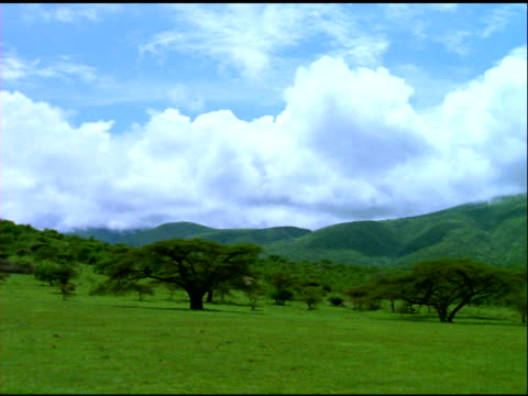 stockvideo's en b-roll-footage met cloudy sky over serengeti national park, tanzania - plant attribute