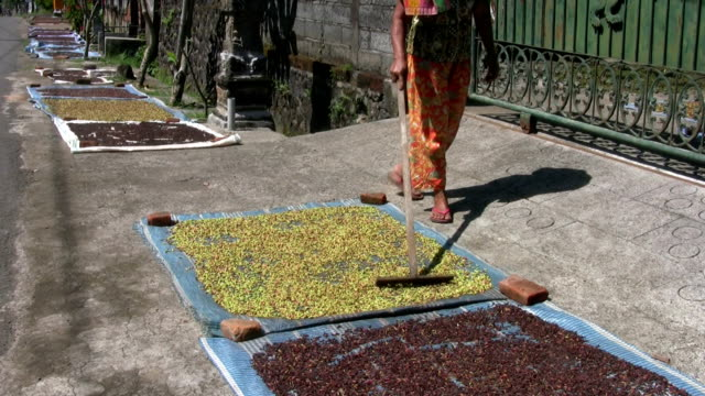 clove harvest drying - indonesia stock videos & royalty-free footage
