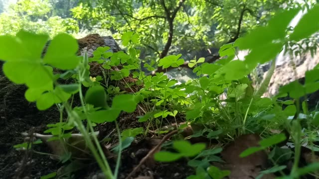 clover plant - clover leaf shape stock videos and b-roll footage