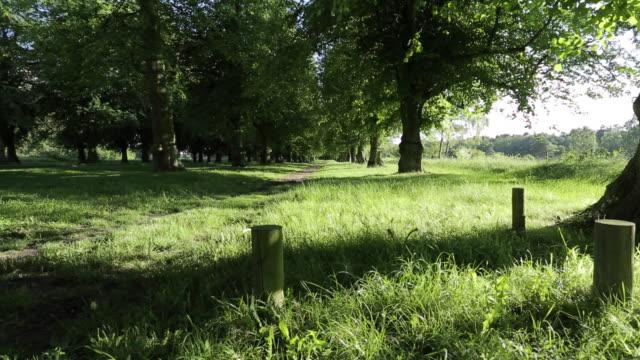 Clumber Park, Nottinghamshire, England, UK, Europe