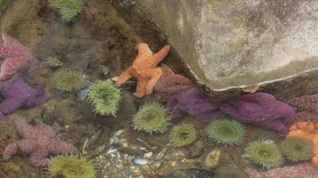 Cluster of colorful starfish