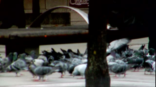 cluster of pigeons feeding from sidewalk near public bench w/ partial sitting human torso pan birds in focus common feral rock pigeons eating - torso stock videos & royalty-free footage
