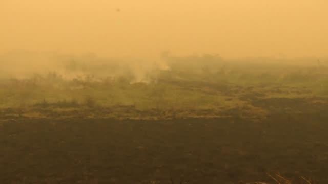 ¿cómo prevenir nuevos desastres en el pantanal, el mayor humedal tropical del planeta? tres personas implicadas con el presente y el futuro de la... - planeta stock videos & royalty-free footage