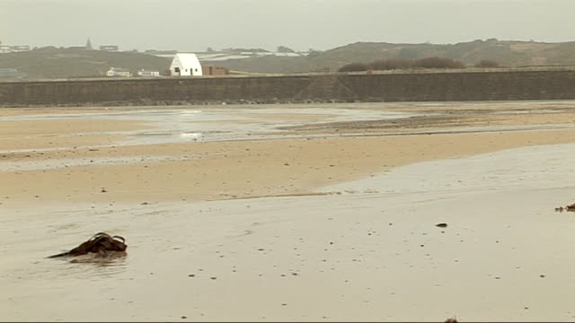 coast and martello tower; beach / waves breaking / water on beach / traffic along road / give way sign - 道を譲る点の映像素材/bロール