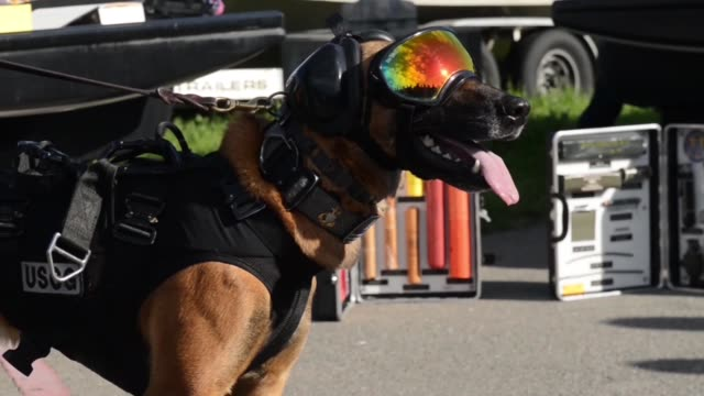 US Coast Guard and canine partner Feco assigned to the Maritime Safety and Security Team 91105 based in Alameda California conduct a vertical...