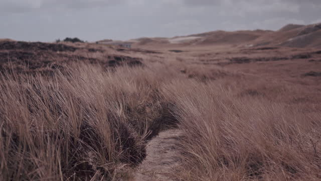 coast landscape in the wind - reed grass family stock videos & royalty-free footage