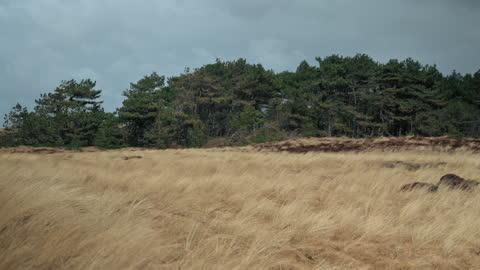 vídeos de stock, filmes e b-roll de paisagem costeira ao vento - caniço