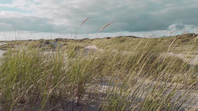 coast landscape island of sylt - north sea stock videos & royalty-free footage