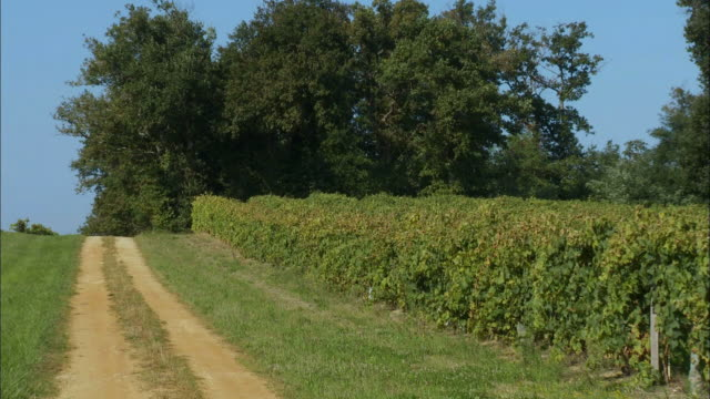 zo, ws, coast of blaye vineyard entrance, blaye, france - aquitaine stock-videos und b-roll-filmmaterial