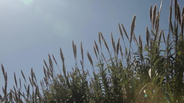 coastal grass, marbella, spain - marram grass stock videos and b-roll footage