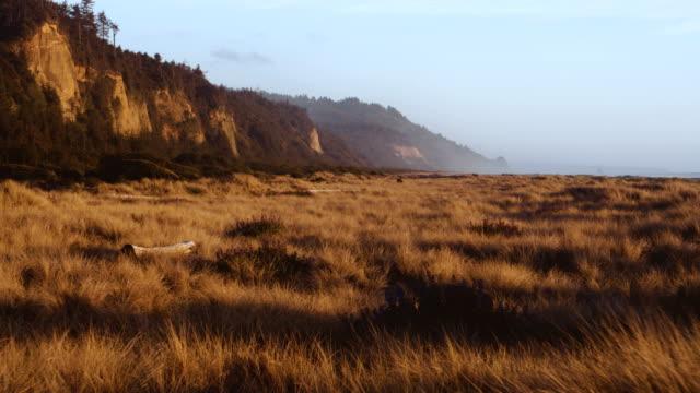 vídeos de stock, filmes e b-roll de coastal landscape - floresta de sequoias