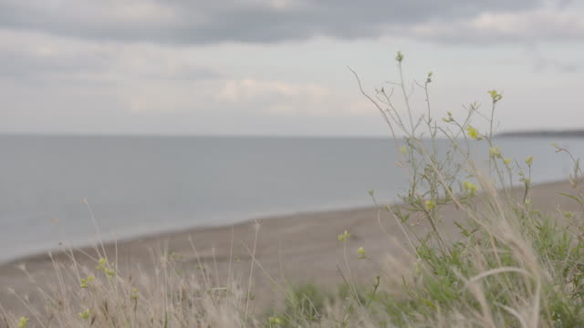 coastal plants grown on a beach in northern kent. - estuary stock videos & royalty-free footage