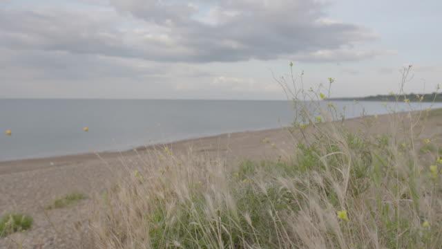 Coastal plants grown on a beach in northern Kent.