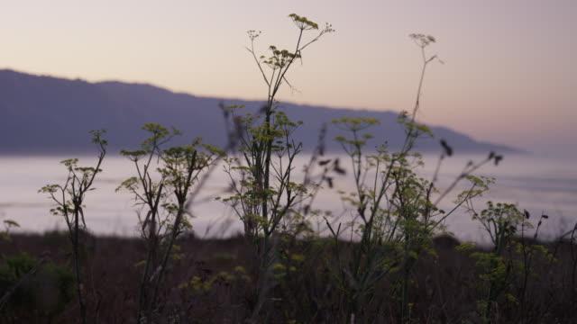 vídeos de stock e filmes b-roll de coastal plants sunset - gema semipreciosa