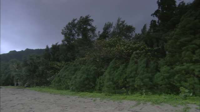coastal trees sway in a breeze as storm clouds drift overhead. - inlet stock videos & royalty-free footage