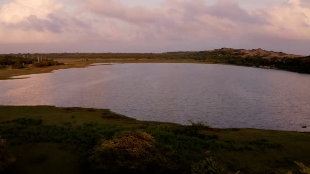 coastal wetlands from southern sri lanka - biodiversity stock videos & royalty-free footage
