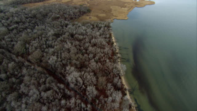 vídeos y material grabado en eventos de stock de aerial pov coastline and wetlands in chesapeake bay / baltimore, maryland, usa - árbol latente