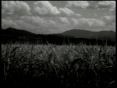 stockvideo's en b-roll-footage met coastline. rice paddy w/ mountains bg. peasant workers in paddy bundling rice to dry. workers in rice paddy w/ many stalk bundles standing. - 1936