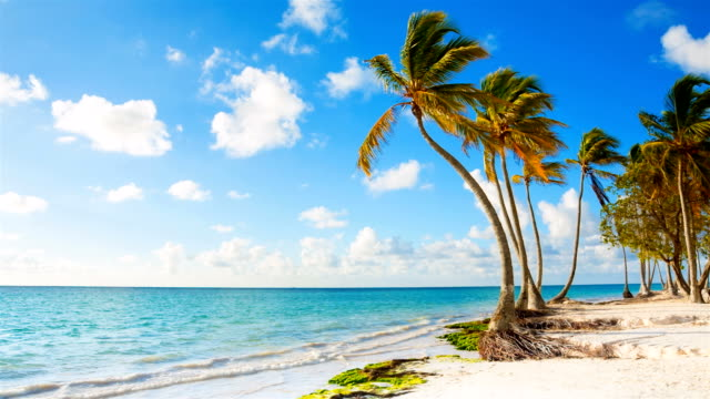 coastline with palm trees - palm stock videos & royalty-free footage