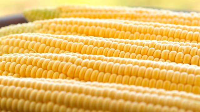 cobs of crude corn