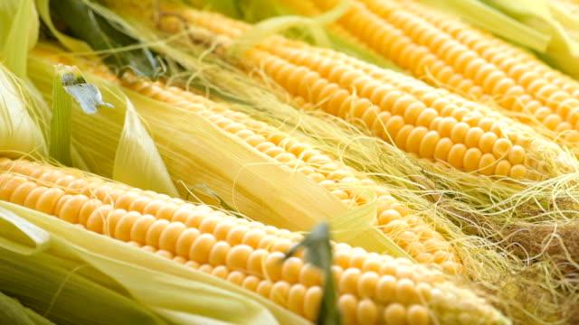 kolven van ruwe maïs