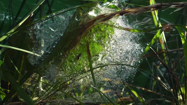 vídeos de stock, filmes e b-roll de teia de aranha no rio - pegar