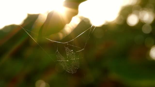 spinne spinnennetz - spinnennetz stock-videos und b-roll-filmmaterial