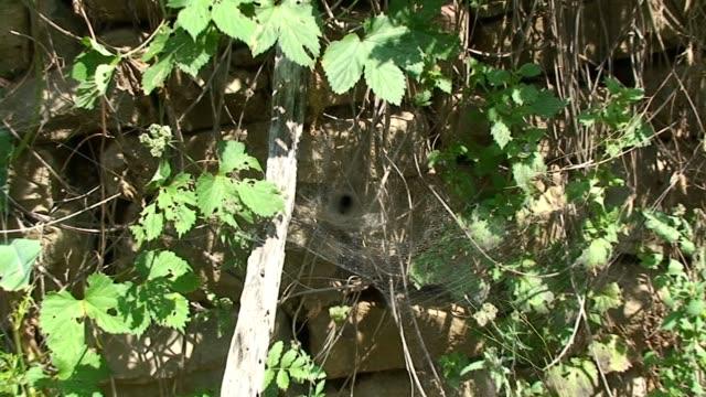cobweb - arachnid stock videos and b-roll footage