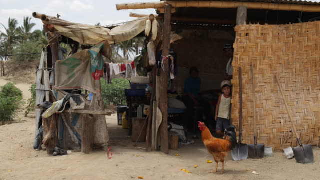 A cock is slowly walking in front of a a self made house in a small village near Sullana Peru There are clothes and fabrics hanging down on leashes A...