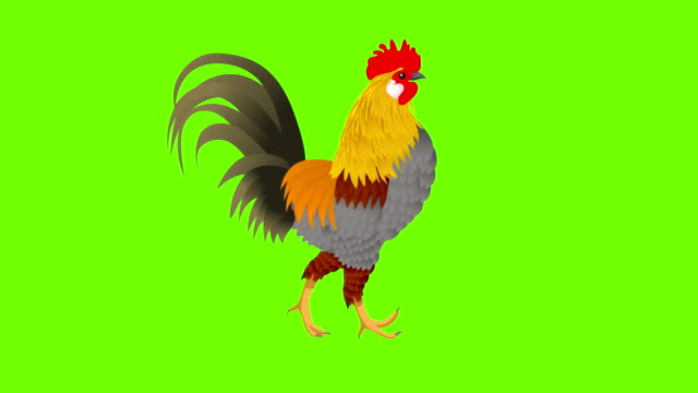cock  walk cycle animation - female animal stock videos & royalty-free footage