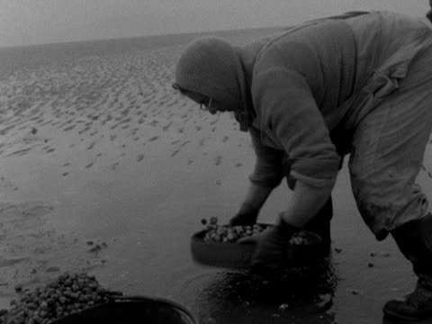 a cockle gatherer sieves her catch on penclawdd beach 1959 - mollusc stock videos & royalty-free footage