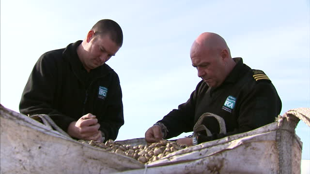 cockle pickers risking lives in lancashire's river ribble estuary for hopes of harvesting a bumper crop. the cockle beds in the ribble estuary opened... - mollusc stock videos & royalty-free footage