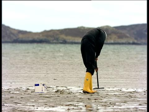 cocklepicker raking through wet sand barra outer hebrides - hebrides stock videos & royalty-free footage