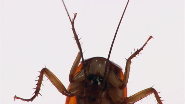 cu la cockroach against white background - ゴキブリ点の映像素材/bロール