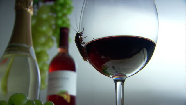 cockroach crawling on red wine glass - wine glass stock videos and b-roll footage