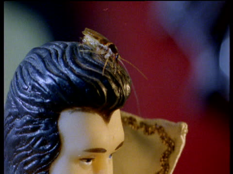Cockroach crawls on head of Elvis Presley statuette