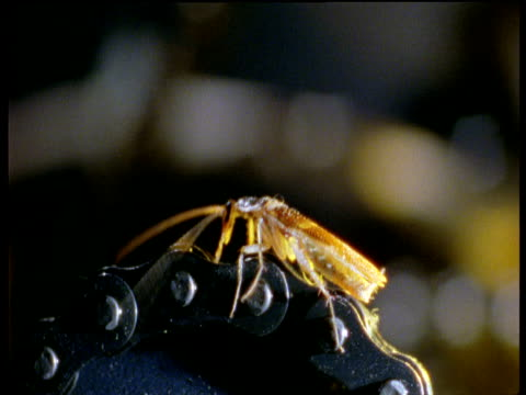 cockroach crawls over chain drive of photocopier - invertebrate stock videos & royalty-free footage