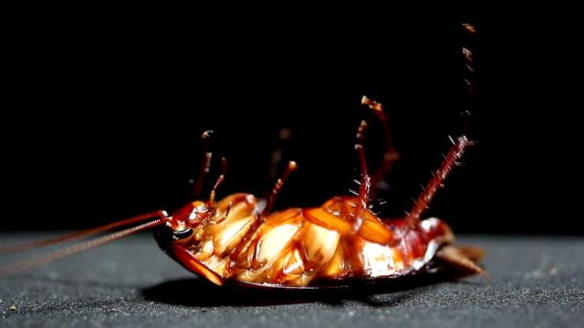 死んでいるゴキブリをクローズ アップ ショット黒の背景スタジオ - ゴキブリ点の映像素材/bロール