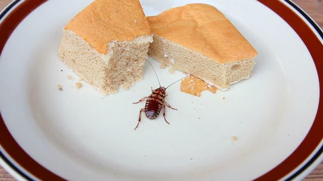 ゴキブリ食べるパン屋さん - ゴキブリ点の映像素材/bロール